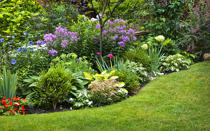 How to divide perennial plants and split oversize shrubs david domoney curved herbaceous border with evergreens and perennials mightylinksfo