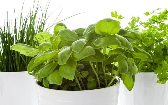 how to grow herbs-in-pots-windowsill indoor herb garden