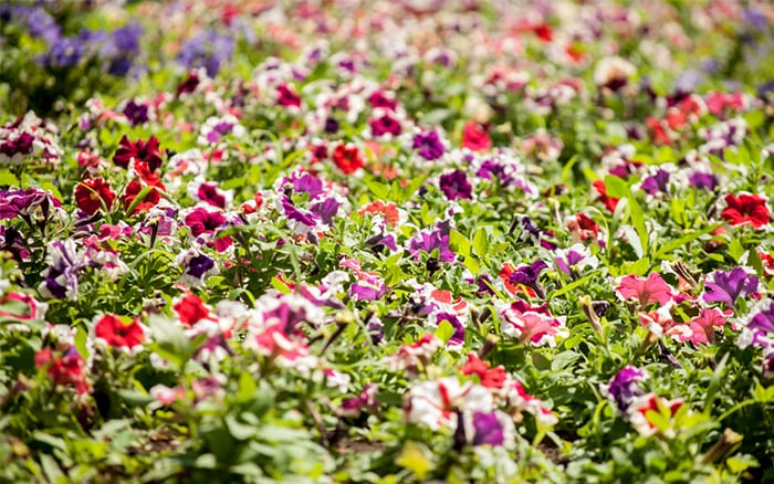 garden bedding plants Bedding Sets Collections