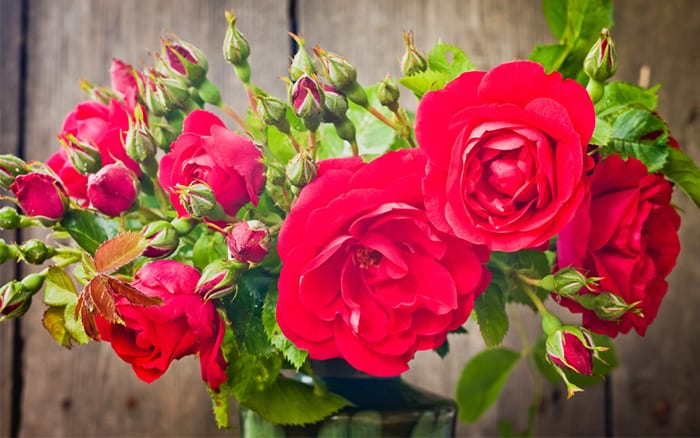 vase-of-red-roses-valentines-day what are the different types of rose plants