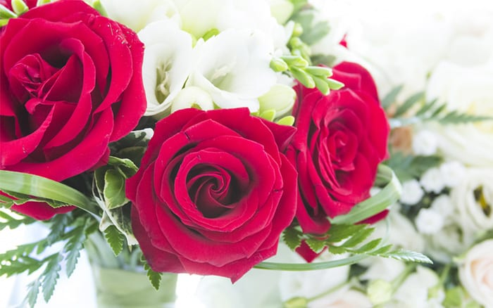 The Top 5 Romantic Flowers and Plants for Valentine\u0026#39;s Day