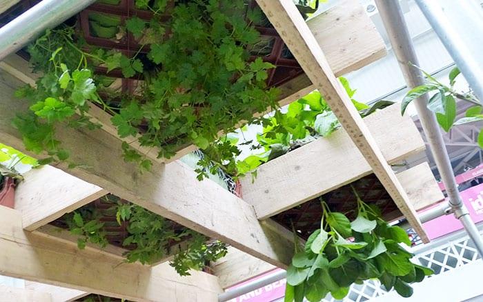 askham-bryan-suspended-planters