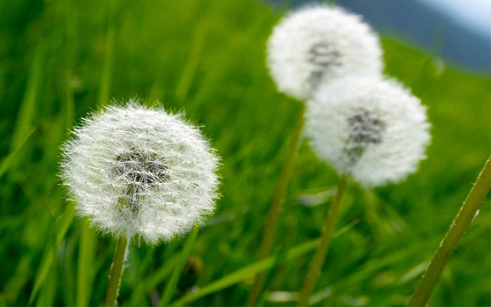how to get rid of weeds in garden quickly