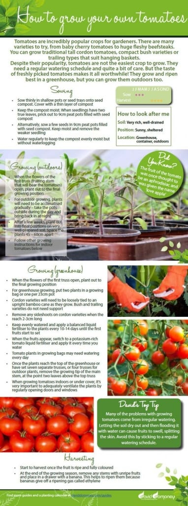 How to grow your own tomatoes. Download this free veg growing guide full of gardening tips on growing tomatoes in the garden and in the greenhouse. Tips on sowing seed, training plants, feeding and harvesting the tomatoes.