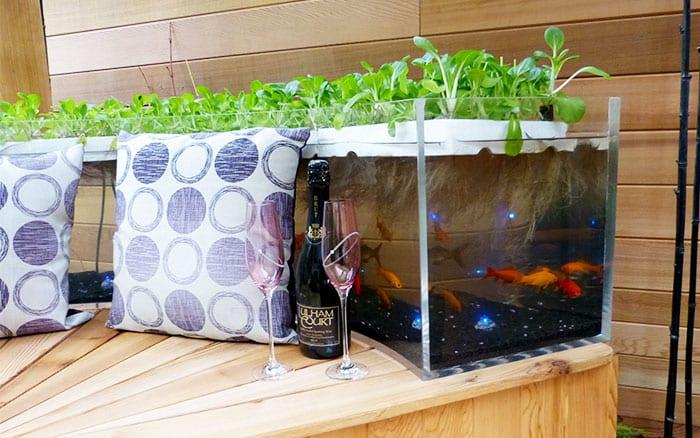 pershore-fish-tank