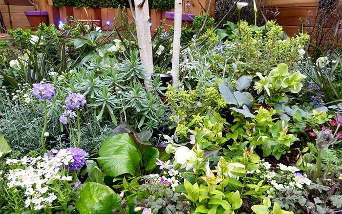pershore-planting