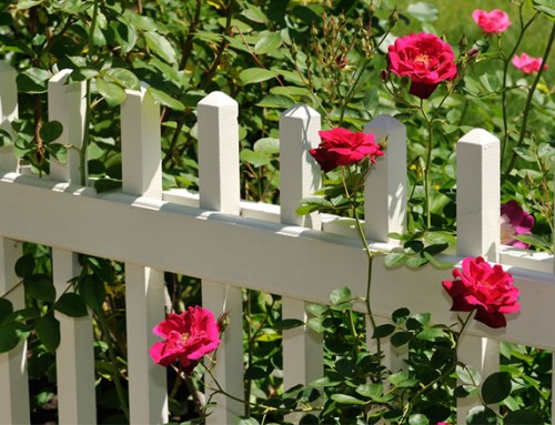 The Expert Gardening Guide to Fencing