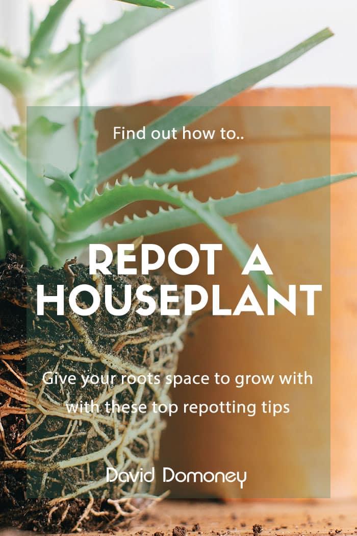 repot a houseplant