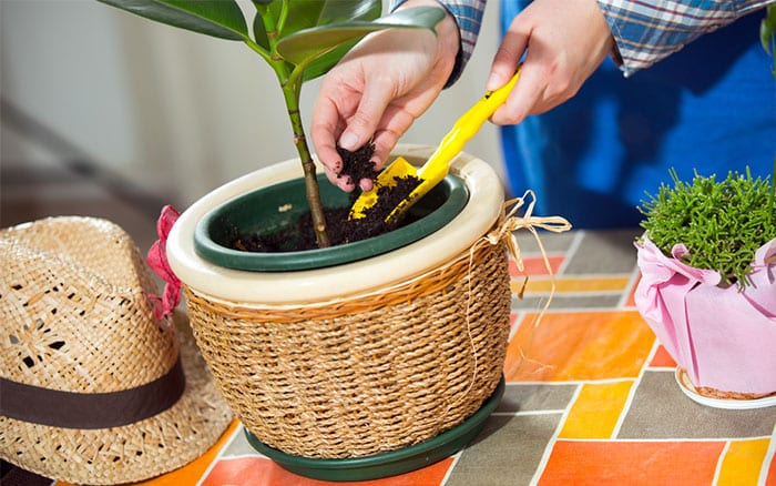 compost houseplant how to choose the right type of compost