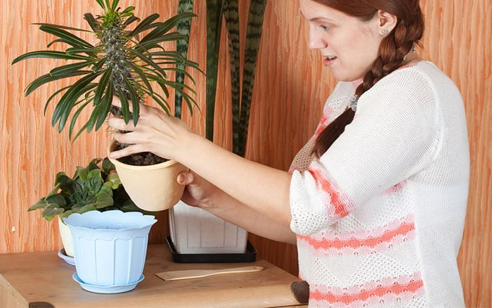 woman-repotting-a-houseplant