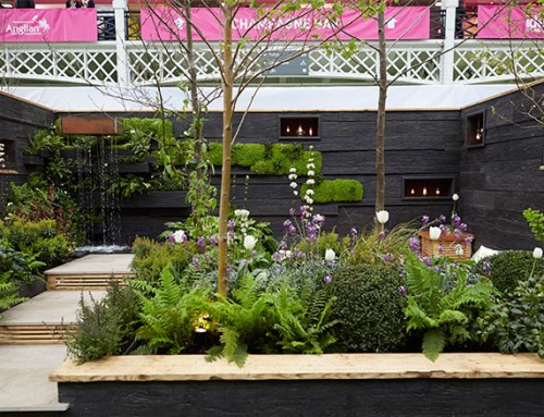 Young Gardeners of the Year 2015 – See the finished gardens!