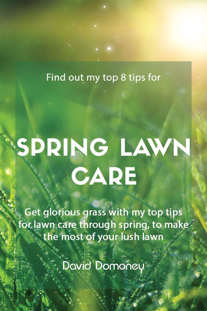 Top tips for spring lawn care