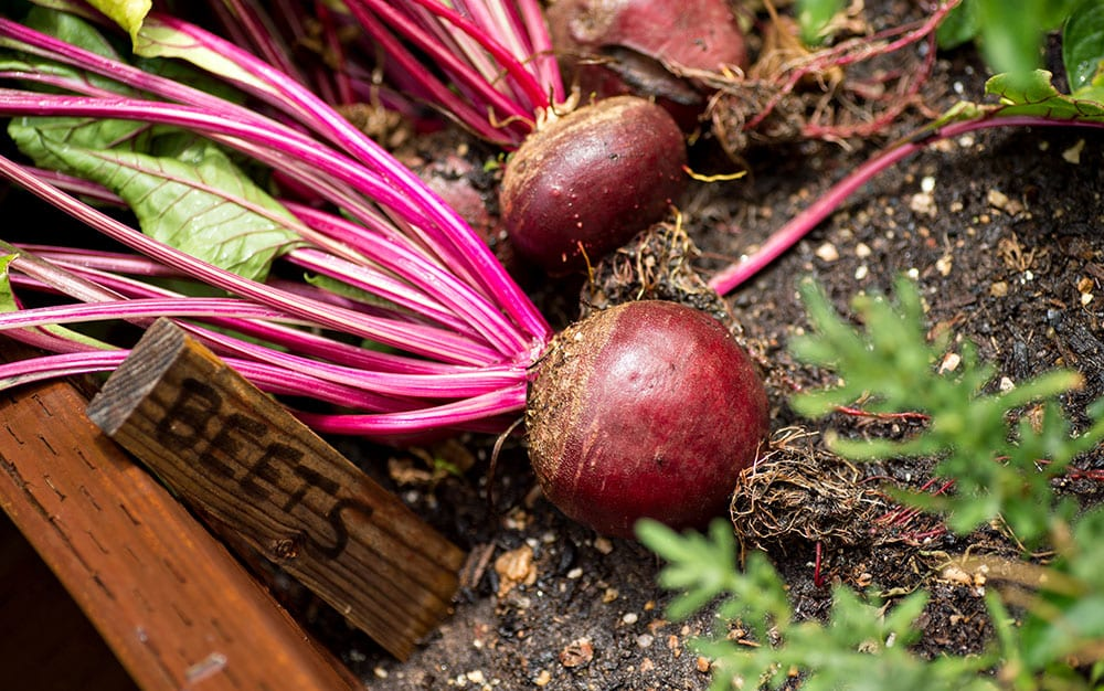 Edible Gardening The Top 10 Vegetable Crops For