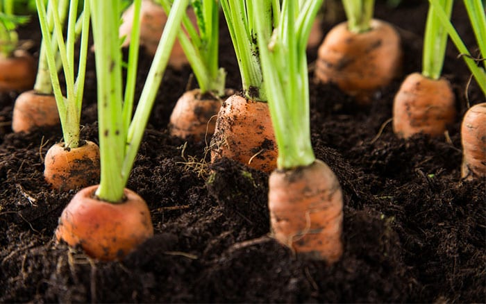 The 12 Best Vegetable Crops To Grow In Containers David Domoney