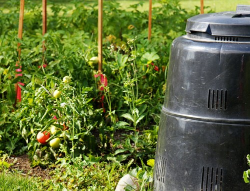 The Expert Gardening Guide to Compost