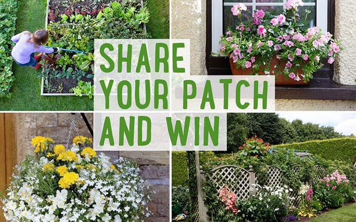 Share An Image Of Your Garden Patch To Win!