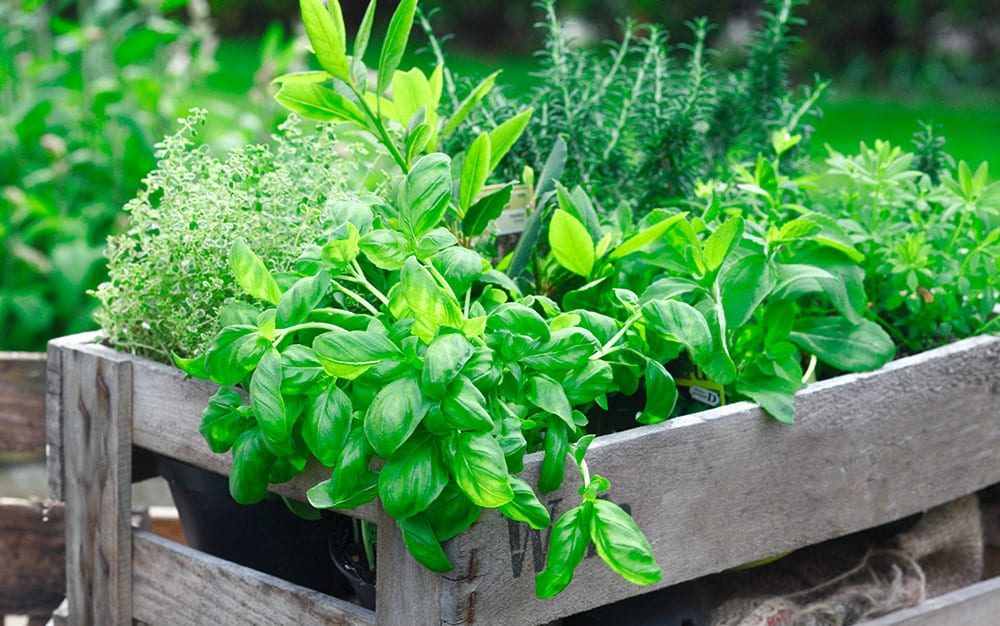 herb-garden-in-a-box