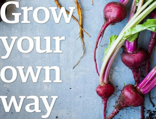 Grow Your Own Way: Gardening Campaign with Pinterest
