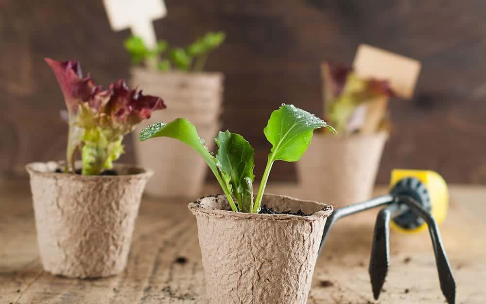 planting-leaves