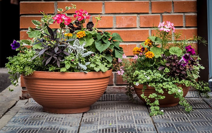 round-bowl-container-terracotta-plant-pots-mixed-planting