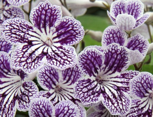 Chelsea Flower Show: The 8 best new plant varieties