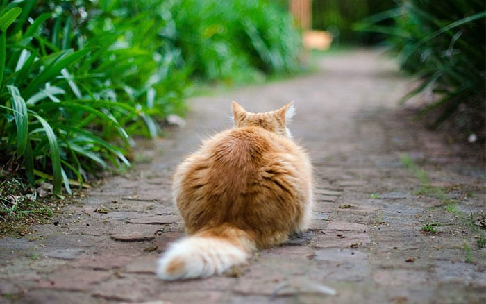 how to stop cats coming in the garden