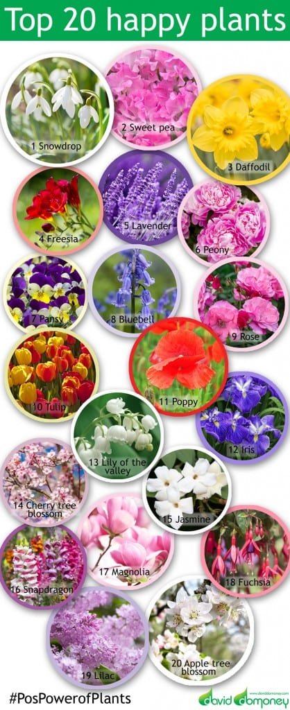 chelsea-plants