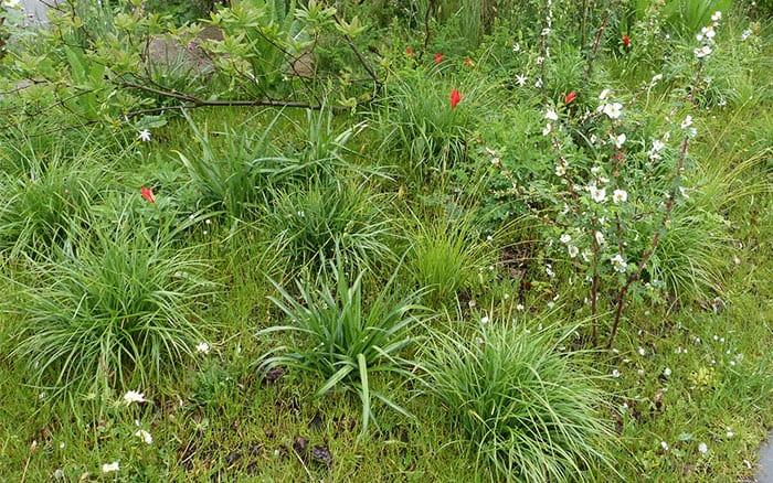 Naturalistic planting