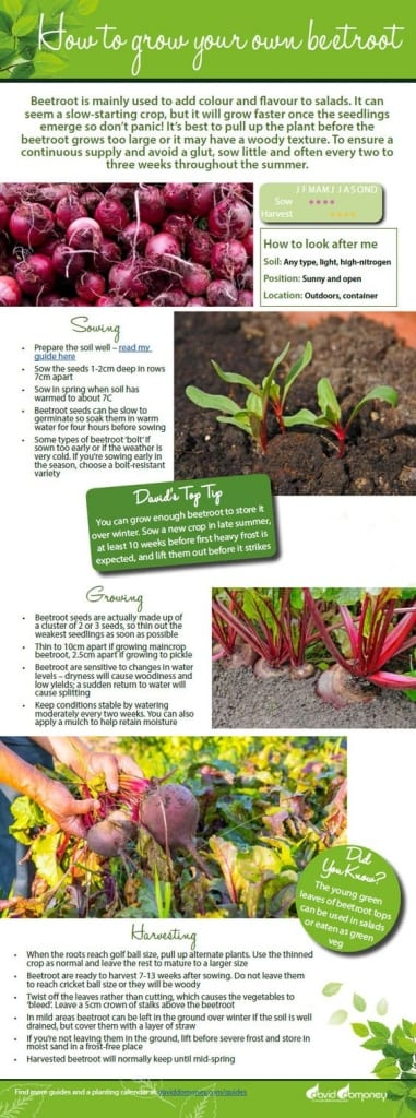 How to grow your own beetroot. Free veg growing guide with information on sowing seeds, caring for seedlings and harvesting plants. Perfect for the kitchen garden