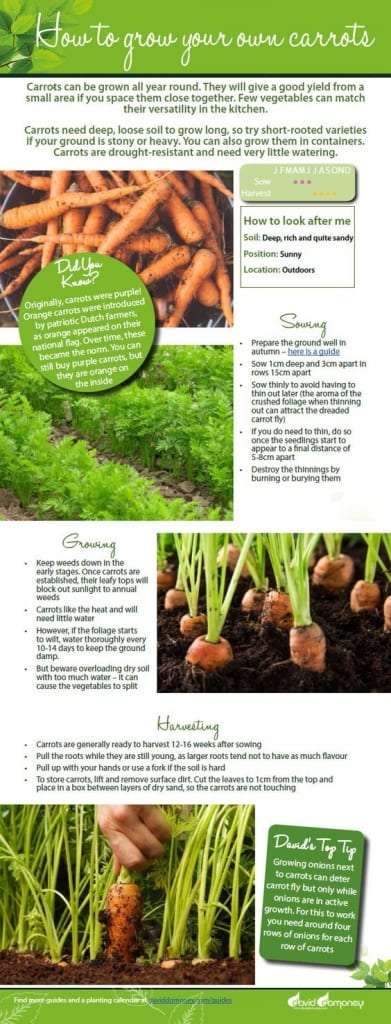 How to grow your own carrots. Free veg growing guide including advice on sowing seeds, growing plants, avoiding carrot root fly and when to harvest your carrots. Perfect grow your own resources for the kitchen garden