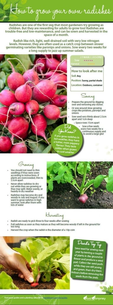 How to grow your own radishes. Free veg growing guide including sowing,   growing and harvesting advice for the kitchen garden