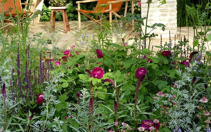 Magenta plants