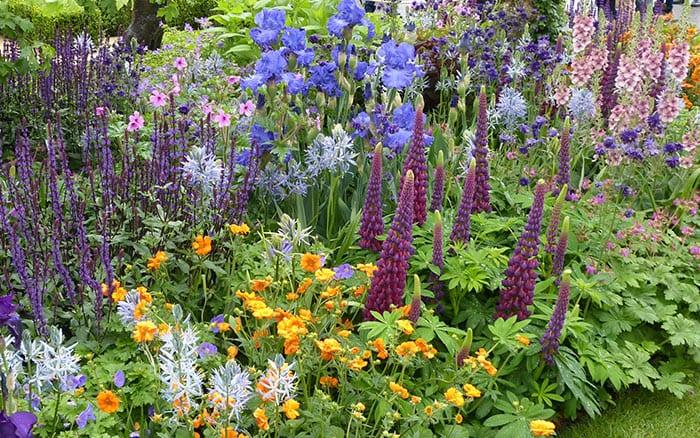 Healthy Cities garden