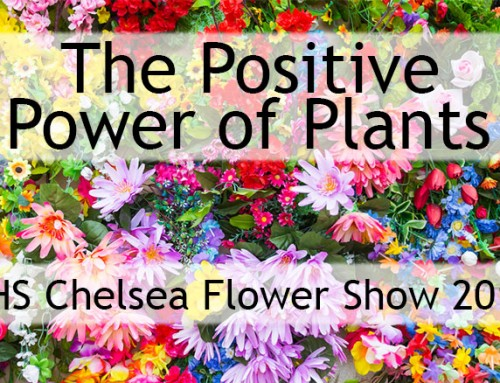 Chelsea Flower Show: The Positive Power of Plants Top 20!