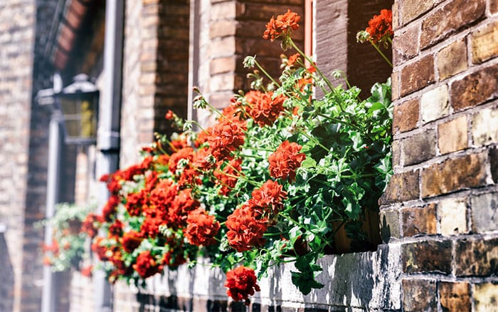 urban-garden-windowbox