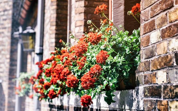 urban-garden-windowbox