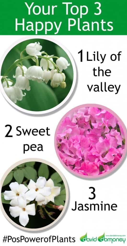 chelsea-plants-top-3
