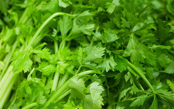 coriander-stem-and-leaves-grow-your-own