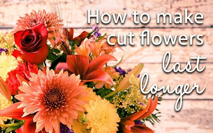 the definitive guide to making fresh cut flowers last longer. Black Bedroom Furniture Sets. Home Design Ideas