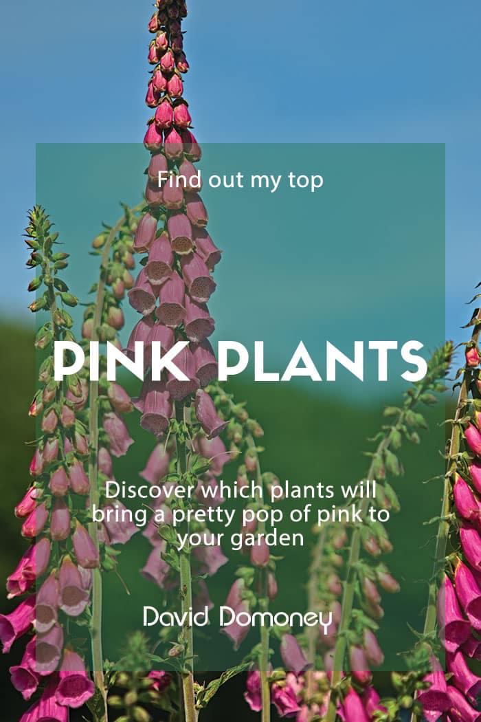 Top pink plants