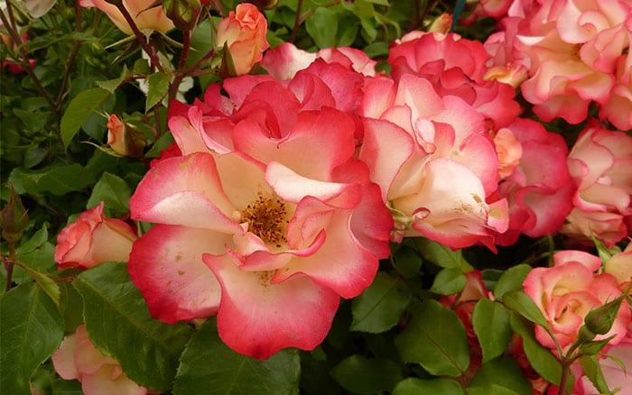 rosa-birthday-girl