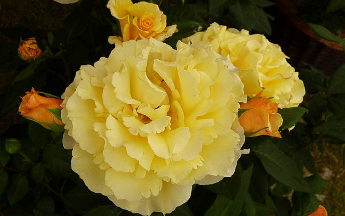 rosa-sunny-sky