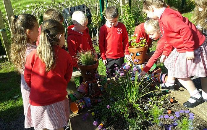 ballycraigy-school-cultivation-school-gardening-campaign-winner