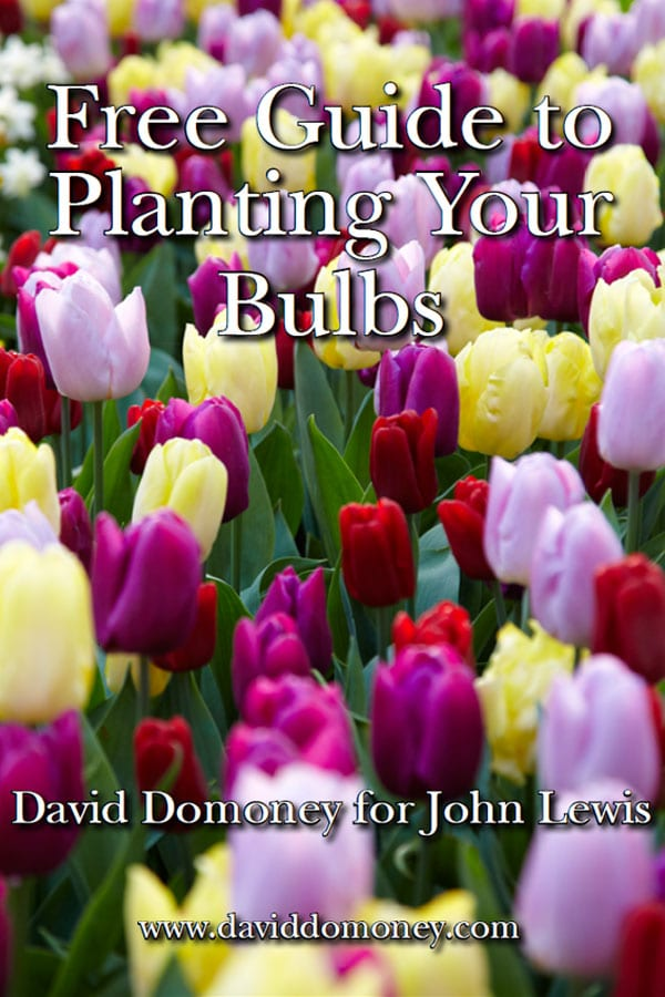 David domoney for john lewis free bulb planting guide mightylinksfo