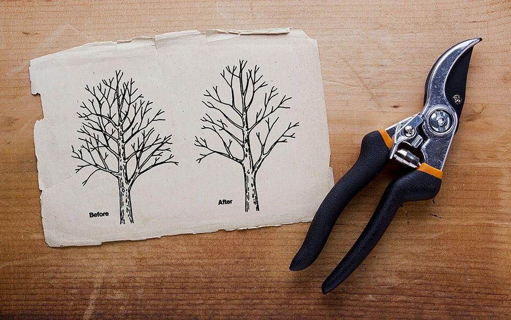 Autumn Pruning plan