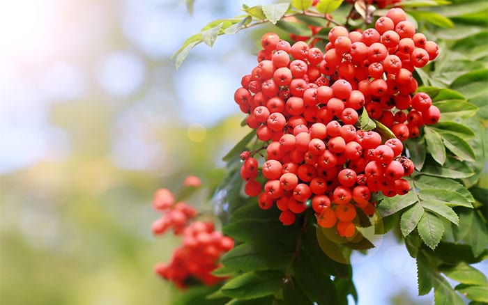 Throw Out Bearing >> The 10 best winter plants to attract and feed wild garden ...