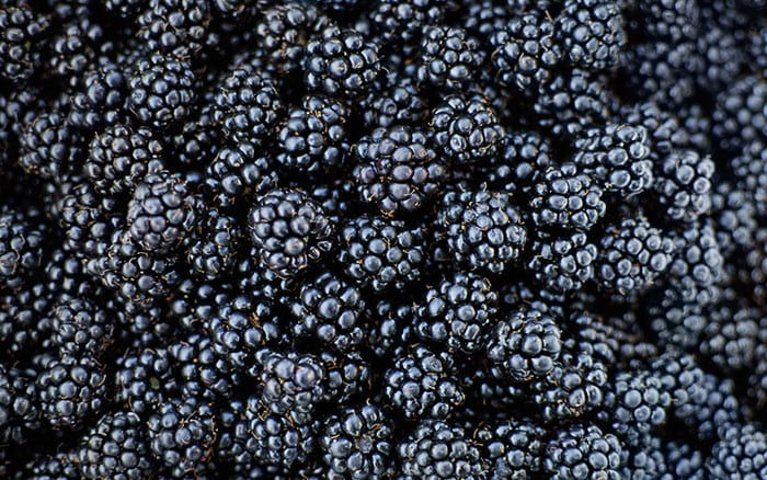 blackberries-soft-fruit-how-to-grow-your-own-fruit-bushes