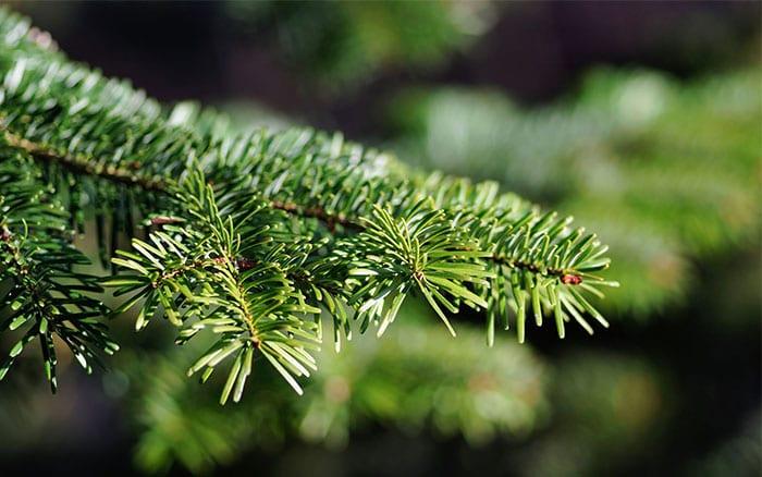 Christmas Tree Decorations Ribbons
