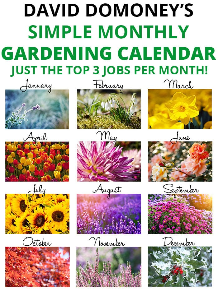 David Domoney's Simple Monthly Gardening Calendar: Just the top 3 jobs per month!