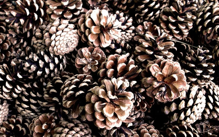 The best festive christmas decorations from the garden for What to do with pine cones for christmas